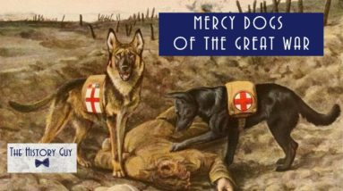 Mercy Dogs of the Great War