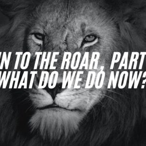 Run To The Roar, Part 2 – What Do We Do Now?
