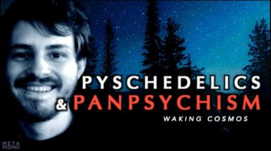 Consciousness, Psychedelics, and Panpsychism | Andrés Gómez Emilsson | Waking Cosmos